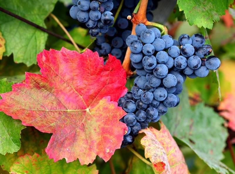El vino de Mallorca atrae turismo gastronómico