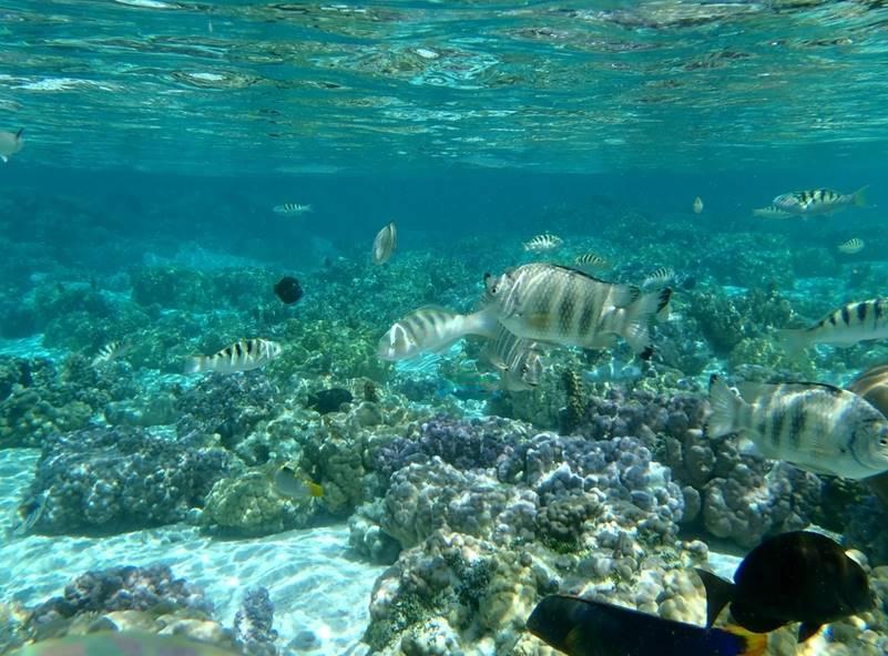 fondo marino de mallorca